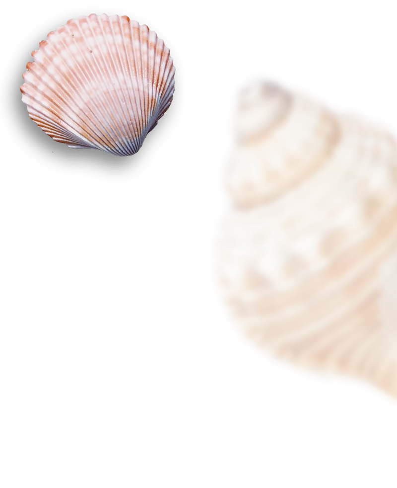 fondo conchas